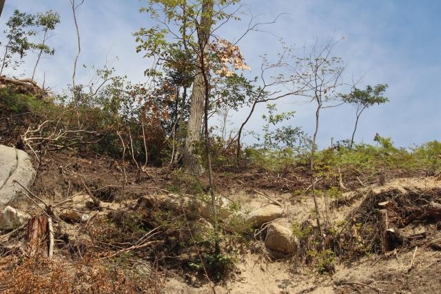 破壊された森林
