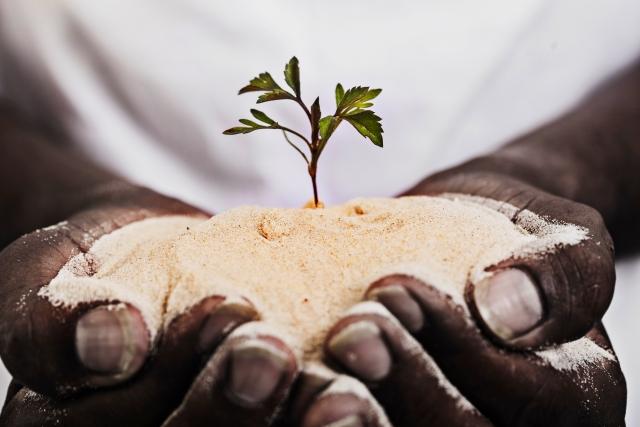 植林は大気汚染対策に有効